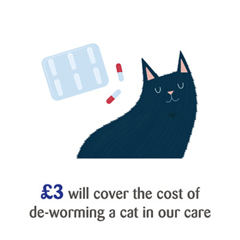 Weekly Lottery Win With Cats Cats Protection