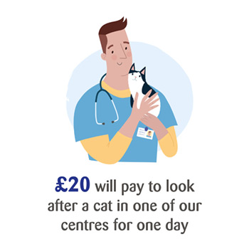 £20 will pay to look after a cat in one of our centres for one day