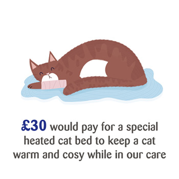 £30 would pay for a special heated cat bed to keep a cat warm and cosy while in our care