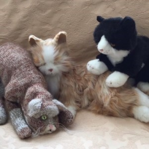 Sarah Howes' cuddly cat Raffi with Salt and Pepper
