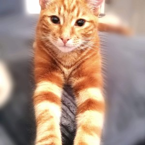 """""""A lovely surprise to win £5 in the Cats Protection Lottery. I can't have a cat of my own but I am a proud 'cat granny' of the mighty Thor, a gorgeous ginger boy. """" Jan Eglin"""