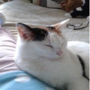 June Gascoynes cat Mary