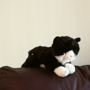 Ricky Fais' raffle subscription cat Odin