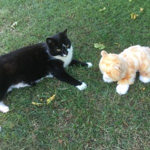 Louis, adopted from Cats Protection Wootton Bassett four years ago, enjoying the company of his new friend.