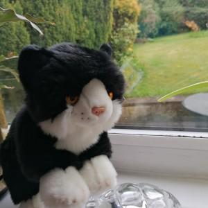 Dawn Cavendish's cuddly cat Benji