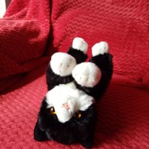 Chris Beauchamp's cuddly cat Felix