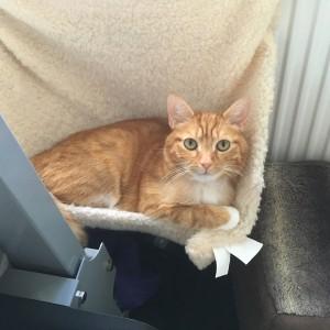 Sophie's cat Leo