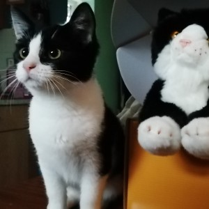Becky Collins' cat George and her twin