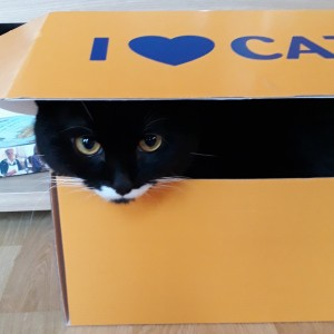Chernish playing hide and seek in a Cat Lovers Raffle box
