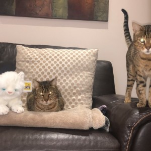 Ciara McDonell's cats Callee and Cooper with fast entry cuddly cat