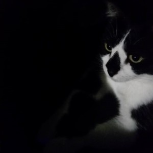 Irina Comanescu's cat Beauty