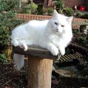 Prize winner Martin's cat, 'Leo'