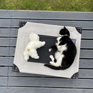 Liam Davis' cat Luna and fast entry cat