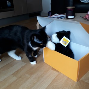 Nadia Sadovska's Cat Chernish, investigating and making friends with a Raffle Cuddly Cat