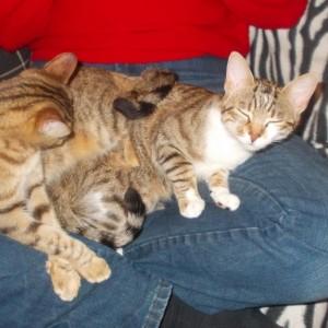 Mandy's cats Oscar and Orson