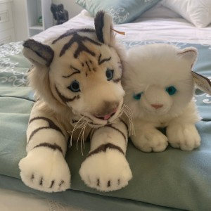 Margaret Brown's fast entry cat Raffles and his friend Tiger
