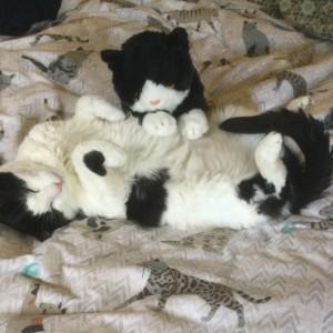 Richard Cluca's cat Aragorn and cuddly cat