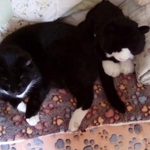 Spring raffle winner Janet Love's cat Daisy May and cuddly cat Felix