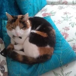 Sarah Hughes cat, Bundle