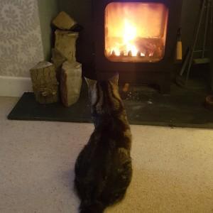 Lottery winner Sue Kirkby's 17 year old cat Elmo