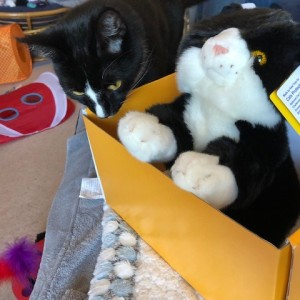 Jenny Bell's Cat Alfie with his subscription cuddly cat