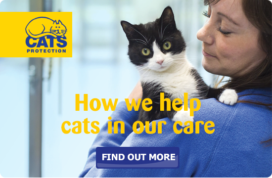 How we help cats in our care.
